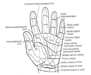 clavicle diagram to label hand diagram to label final slides & clinical applications of the hand
